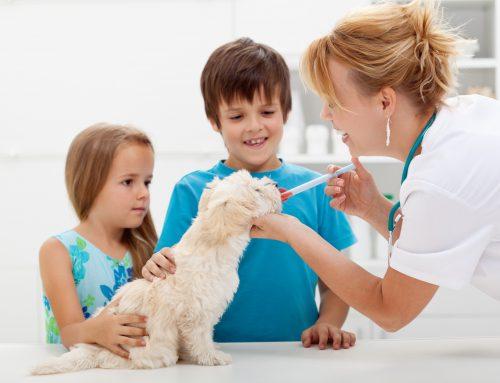 Sintomas, transmissão e tratamento da Leishmaniose Canina